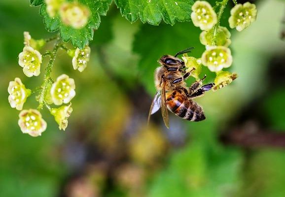 pesticidas abejas